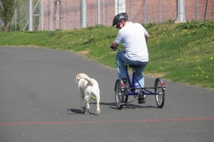 Picture of a Cyclist and guide dog